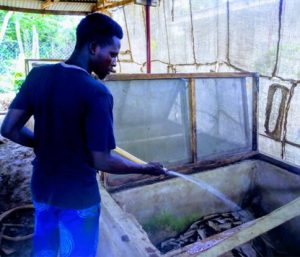 Seven Challenges To Snail Farming And How To Overcome Them