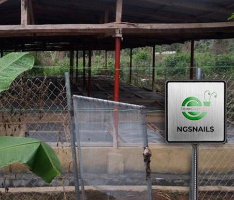 Snail Farming In Nigeria The Best Snail Farm To Choose