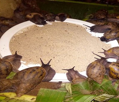 Snail Feeds The Best Choice For Your Snails